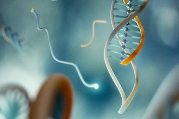 Bí  ẩn thú vị về ADN