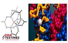 VHN Bio – đơn vị tiên phong ứng dụng công nghệ cao trong sản xuất dược phẩm cho người Việt